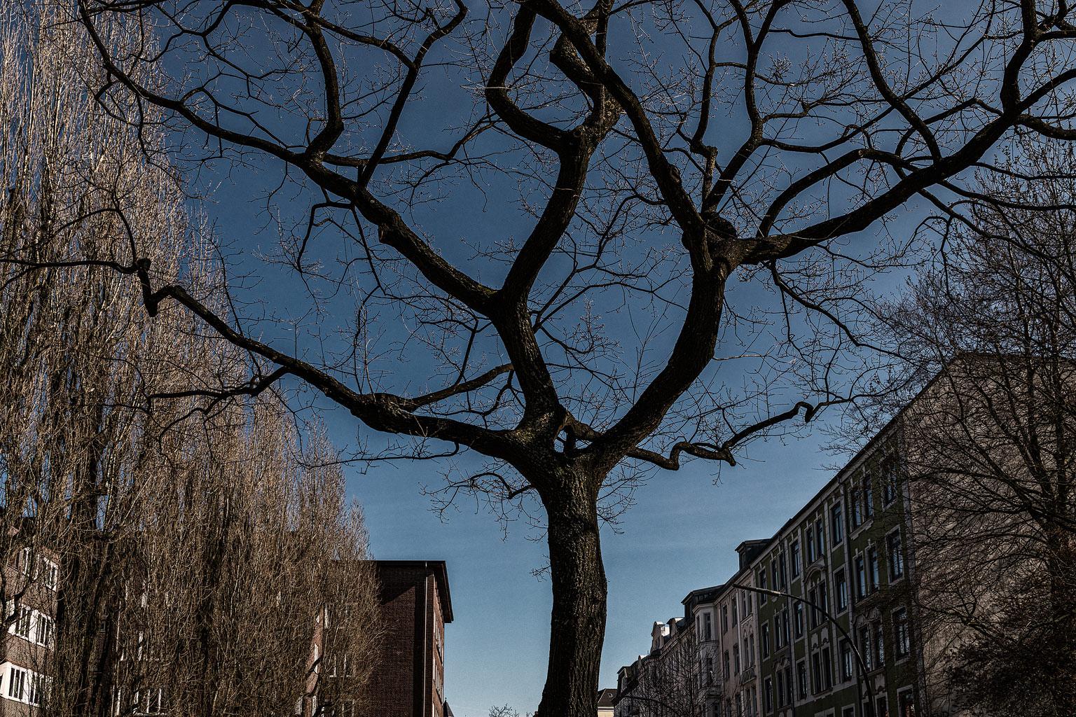 Bahrenfeld Strassenzug Baumsilhouette © Hermann Jansen